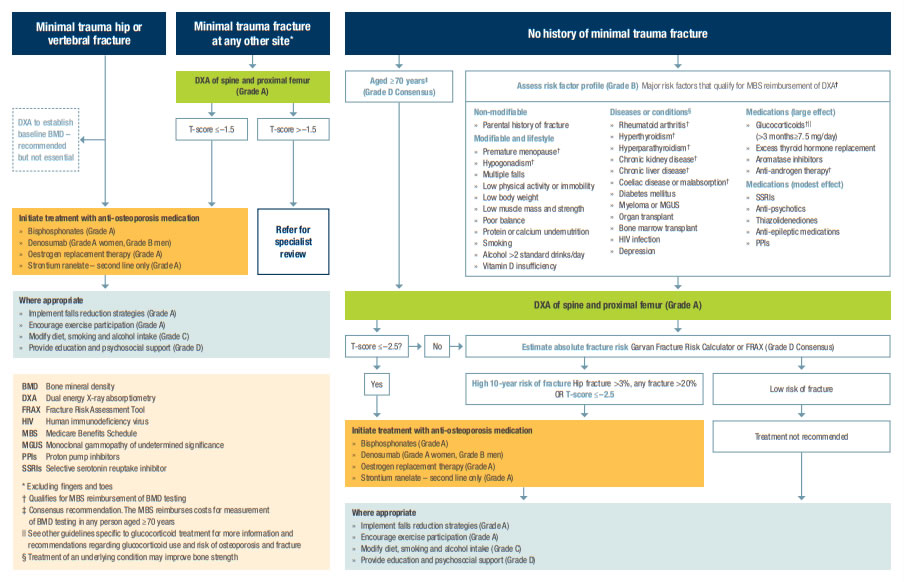 Racgp Osteoporosis Risk Assessment Diagnosis And Management Flowchart